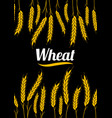 design cover gold wheat ears organic wheat bread vector image vector image