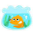 goldfish injury in the bowl vector image vector image