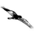 crow or raven in flight vector image