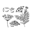 Caraway hand drawn set vector image vector image