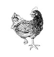 hand drawn chicken vector image