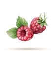 Raspberry hand drawn watercolor vector image