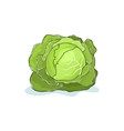 White Cabbage Isolated on White vector image vector image