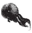 Crested anteater vintage
