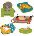 dogs sleeping on the beds vector image