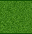 green grass seampess texture - summer background vector image