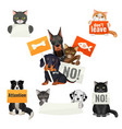 no bullying of animals protesting cats and dogs vector image