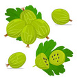 the gooseberry vector image