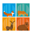 cute animals cards vector image vector image