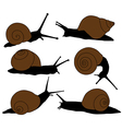 Snail Silhouette vector image vector image