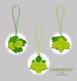the gooseberry vector image vector image