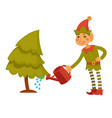 christmas elf in festive clothes waters conifer vector image