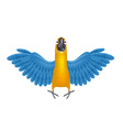 cute macaw or parrot cartoon vector image