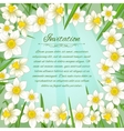 Floral background with white narcissus vector image vector image
