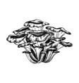maitake mushroom hand-sketched medicinal plants vector image