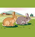 rabbits in a landscape vector image vector image
