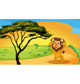 a lion playing on road vector image vector image