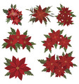 set christmas flowers collection poinsettia vector image vector image