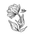 tulip hand drawn ink pen sketch vector image