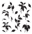 branches and leaves ficus silhouette vector image vector image