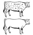 cut beef set poster butcher diagram - cow vector image