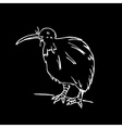 Hand-drawn pencil graphics kiwi bird Engraving vector image