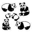 image of a panda bear vector image vector image