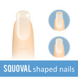 nail shape squoval vector image