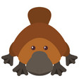 platypus on white background vector image