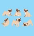 pug dog cartoon set vector image
