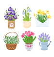 summer and spring flowers in different funny pots vector image