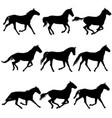 set animal silhouette of black mustang horse vector image vector image