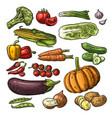 set vegetables cucumbers garlic corn pepper vector image vector image
