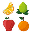 colorful fruit design vector image