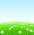 green grass flower field vector image