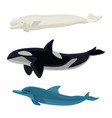 set of dolphin killer whales and orca aquatic vector image