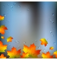 Autumn foliage on wet window vector image vector image