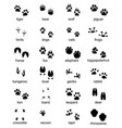 footprints wild animals vector image vector image