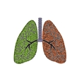 Lungs The structure of the human lung vector image vector image