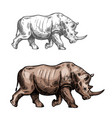rhinoceros sketch wild animal isolated icon vector image vector image