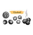 ink sketch chestnuts vector image vector image