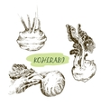 Kohlraby vector image vector image
