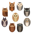 set stylized owls collection decorative vector image