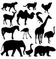 silhouette elephant tiger bear giraffe flamingo vector image