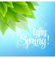 Spring fresh green leaves vector image vector image