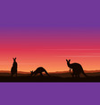 beauty landscape kangaroo silhouette collection vector image vector image