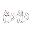 cute white persian cat vector image vector image