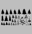 fir or pine trees on white background vector image