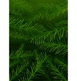 tree pine branches background vector image vector image