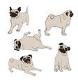collection pug dog icons vector image